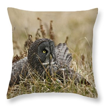 On Guard Throw Pillow by Inspired Nature Photography Fine Art Photography
