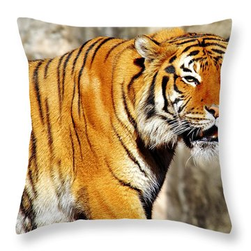 On The Prowl Throw Pillow by Jason Politte