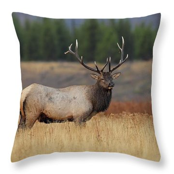 On The Range Throw Pillow by Daniel Behm