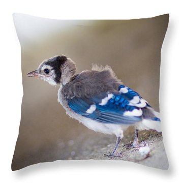 one day...I will fly Throw Pillow by Shane Holsclaw