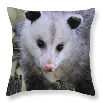 Opossum Throw Pillow by Angie Vogel