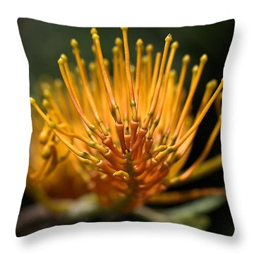 Orange Grevillea Throw Pillow by Joy Watson
