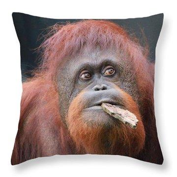 Orangutan Portrait Throw Pillow by Dan Sproul