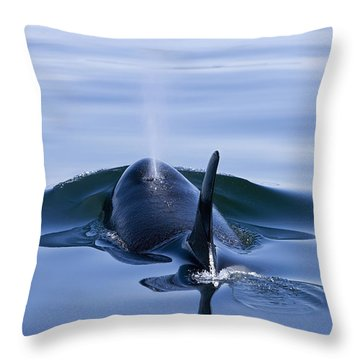 Orca Whale Surfaces In Lynn Canal Throw Pillow by John Hyde