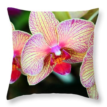 Orchid Trio Throw Pillow by Kathleen Struckle
