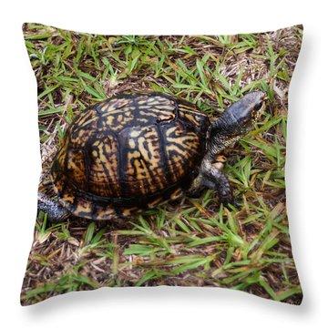 Box Turtle Throw Pillow by Mechala  Matthews