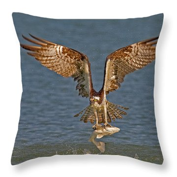 Osprey Morning Catch Throw Pillow by Susan Candelario