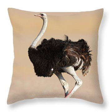 Ostrich Throw Pillow by Johan Swanepoel