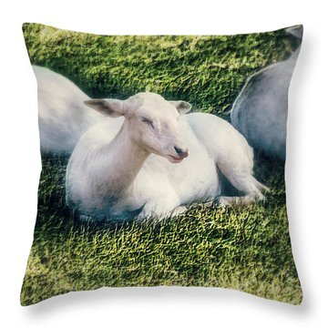 Out To Pasture Throw Pillow by Melanie Lankford Photography