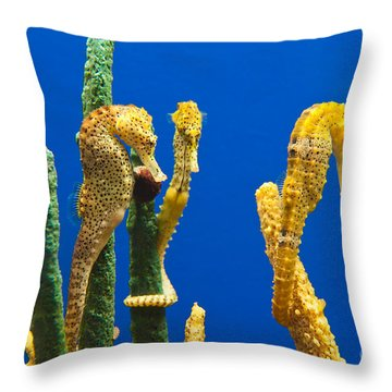 Pacific Seahorses Hippocampus Ingens Are Among The Giants Of Their World Throw Pillow by Jamie Pham