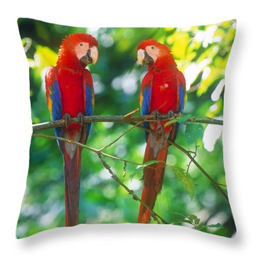 Pair Of Scarlet Macaws Throw Pillow by Art Wolfe