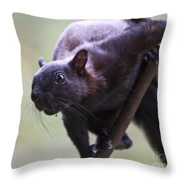 Panamanian Tree Squirrel Throw Pillow by Heiko Koehrer-Wagner
