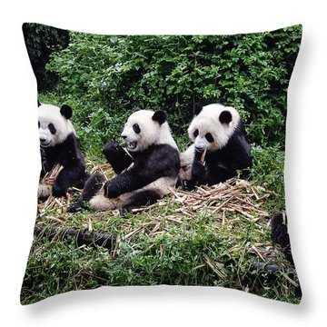 Pandas In China Throw Pillow by Joan Carroll