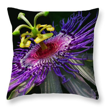 Passion Flower Throw Pillow by Douglas Stucky
