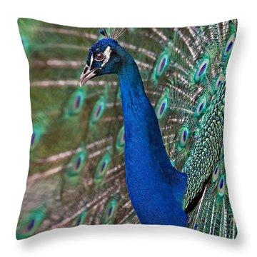 Peacock Display Throw Pillow by Susan Candelario