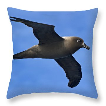 Pelagic Seabird... Throw Pillow by Nina Stavlund
