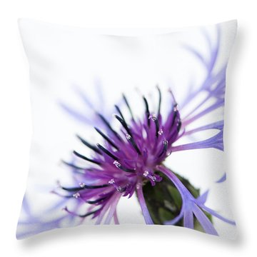Perennial Cornflower Throw Pillow by Anne Gilbert