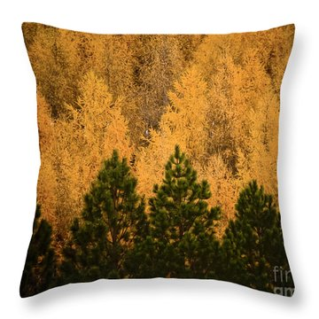 Pine Trees Throw Pillow by Tim Hester