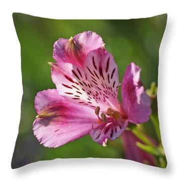 Pink Alstroemeria Flower Throw Pillow by Rona Black