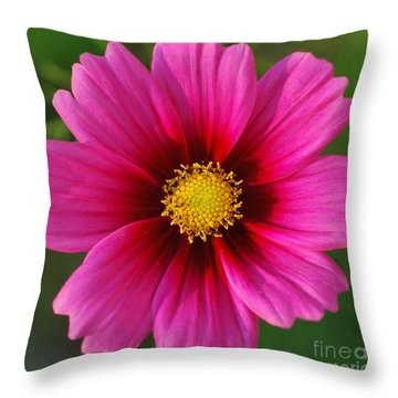 Pink Cosmos Throw Pillow by Kathleen Struckle