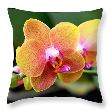 Pink Yellow Orchid Throw Pillow by Rona Black