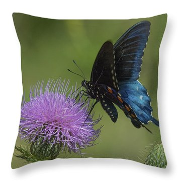 Pipevine Swallowtail Visiting Field Thistle Din158 Throw Pillow by Gerry Gantt