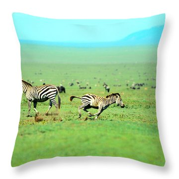 Playfull Zebras Throw Pillow by Sebastian Musial