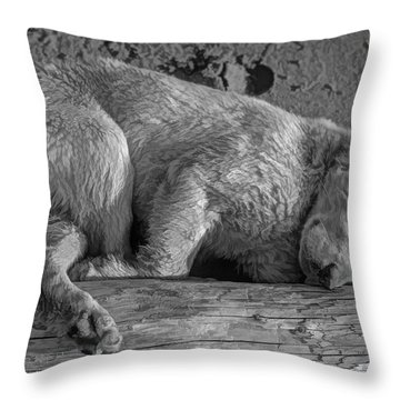 Pooped Puppy Bw Throw Pillow by Steve Harrington