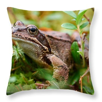 Portrait Of A Frog Throw Pillow by Jouko Lehto