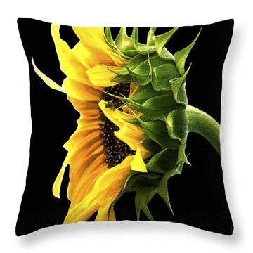 Portrait Of A Sunflower Throw Pillow by Gwyn Newcombe