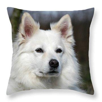 Portrait White Samoyed Dog Throw Pillow by Dog Photos