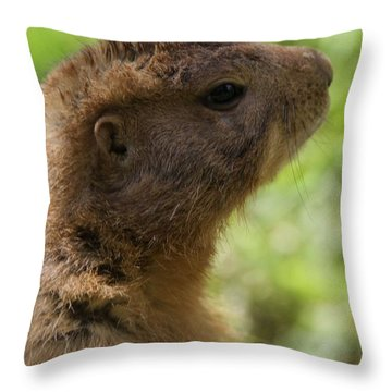 Prairie Dog Portrait Throw Pillow by Dan Sproul
