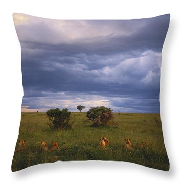 Pride Of Lions Throw Pillow by Art Wolfe