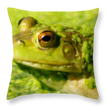 Profiling Frog Throw Pillow by Optical Playground By MP Ray