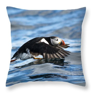 Puffin Starting To Fly Throw Pillow by Heiko Koehrer-Wagner