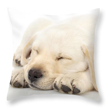 Puppy Sleeping On Paws Throw Pillow by Johan Swanepoel