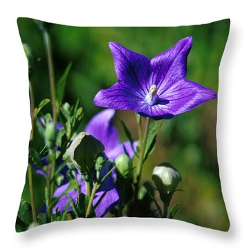 Purple Balloon Flower Throw Pillow by Anonymous