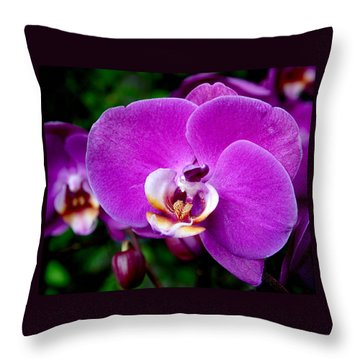 Purple Orchid Throw Pillow by Rona Black