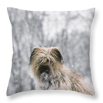 Pyrenean Shepherd Dog Throw Pillow by Jean-Paul Ferrero