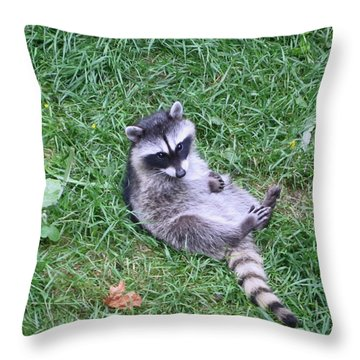 Raccoon Plays In The Grass Throw Pillow by Kym Backland