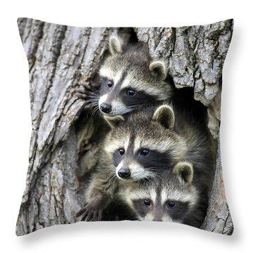 Raccoon Trio At Den Minnesota Throw Pillow by Jurgen & Christine Sohns