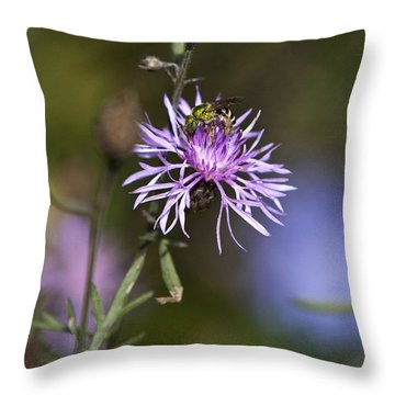 Ragged Robin Throw Pillow by Christina Rollo