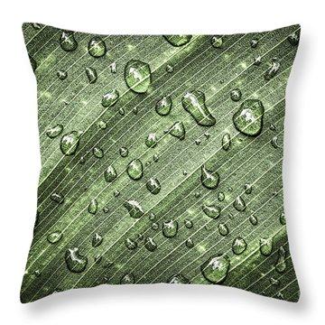 Raindrops On Green Leaf Throw Pillow by Elena Elisseeva