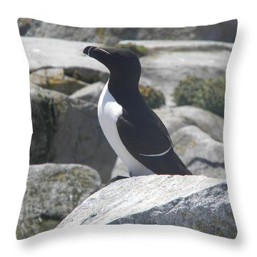 Razorbill Throw Pillow by James Petersen