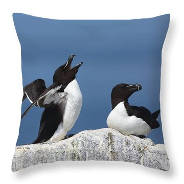 Razorbills Throw Pillow by Daniel Behm