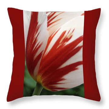Red And White Tulip  Throw Pillow by Ben and Raisa Gertsberg