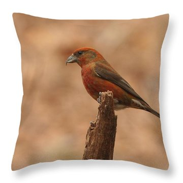 Red Crossbill Throw Pillow by Charles Owens