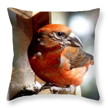 Red Crossbill Throw Pillow by Marilyn Burton