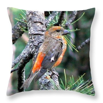 Red Crossbill On Pine Tree Throw Pillow by Marilyn Burton