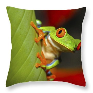 Red Eyed Leaf Frog Throw Pillow by Bob Hislop